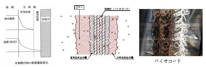 ss-shori1